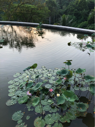 2019☆Bali(15)~フォーシーズンズ・サヤンで朝のお散歩♪_f0207146_15592147.jpg