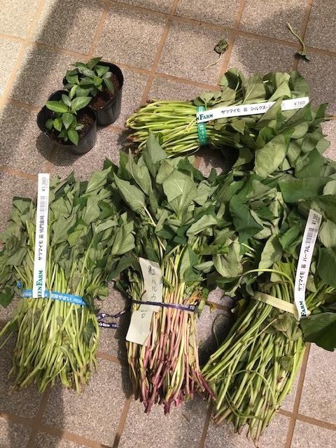 雨の合間に薩摩芋とモロヘイヤの苗植え付け5・1_c0014967_06064208.jpg