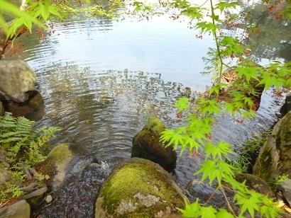 清水園より 御案内です。_e0135219_12065593.jpg