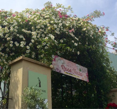 開花 Blooming〜ジュリアーニの見たバラは_e0103327_14243810.jpg