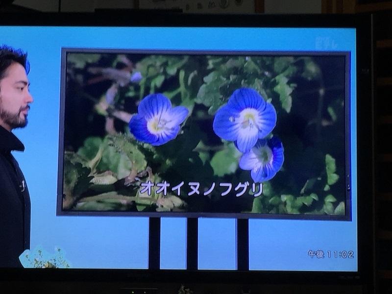 NHKに学ぶ女子アナ生存戦略_f0076731_11394267.jpg
