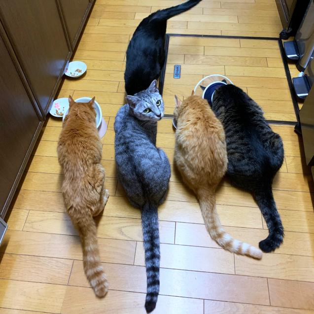 並んで食べて♪☆収支報告つき_d0355333_11505024.jpg