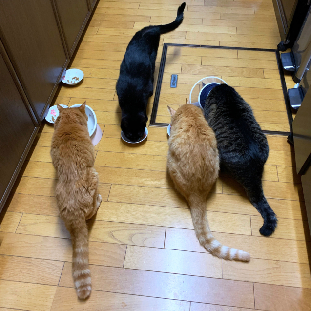 並んで食べて♪☆収支報告つき_d0355333_11505674.jpg