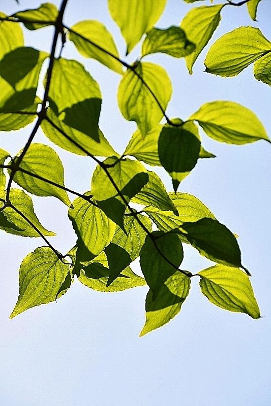 緑がまぶしい!_b0314043_07581272.jpg