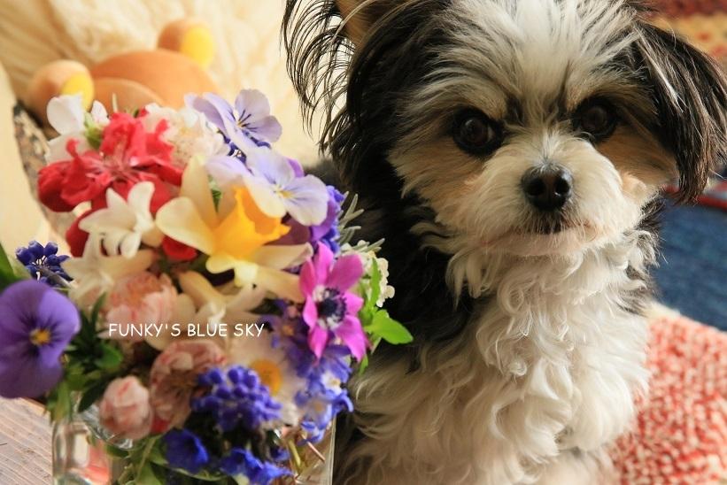 庭の小さなブーケ** (4月17日)_c0145250_11512604.jpg
