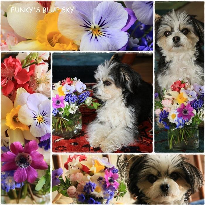 庭の小さなブーケ** (4月17日)_c0145250_11513916.jpg