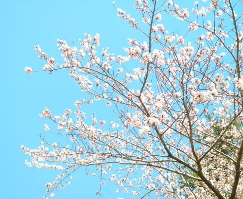 お花見外出_c0350752_15130280.jpg