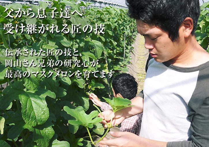 肥後グリーン 熊本産高級マスクメロン『肥後グリーン』の定植後の様子(前編)_a0254656_17180157.jpg