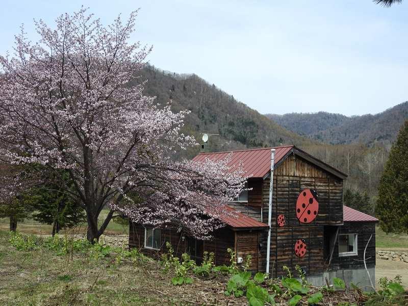 八剣山麓の桜_d0391670_22134792.jpg