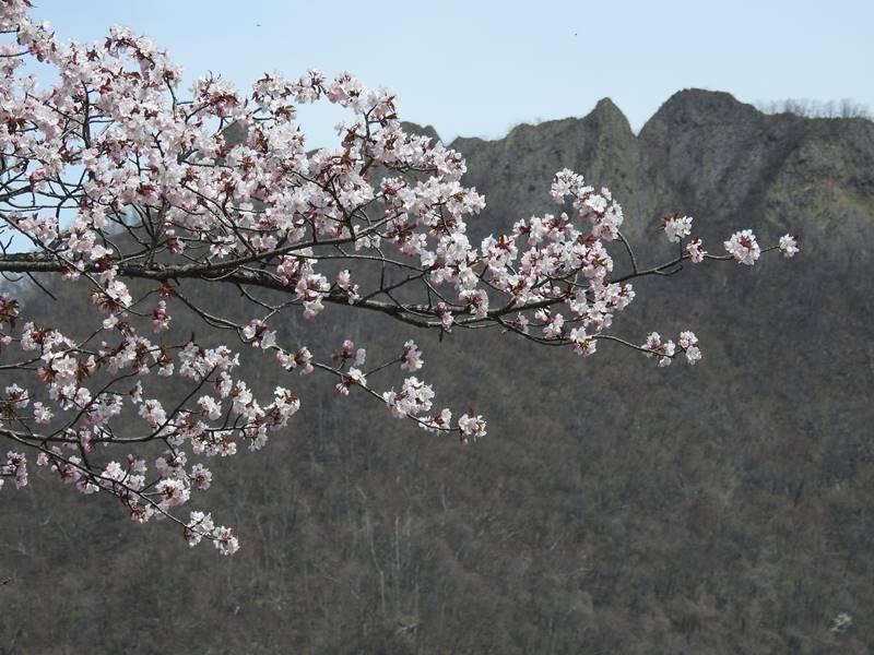 八剣山麓の桜_d0391670_22184068.jpg