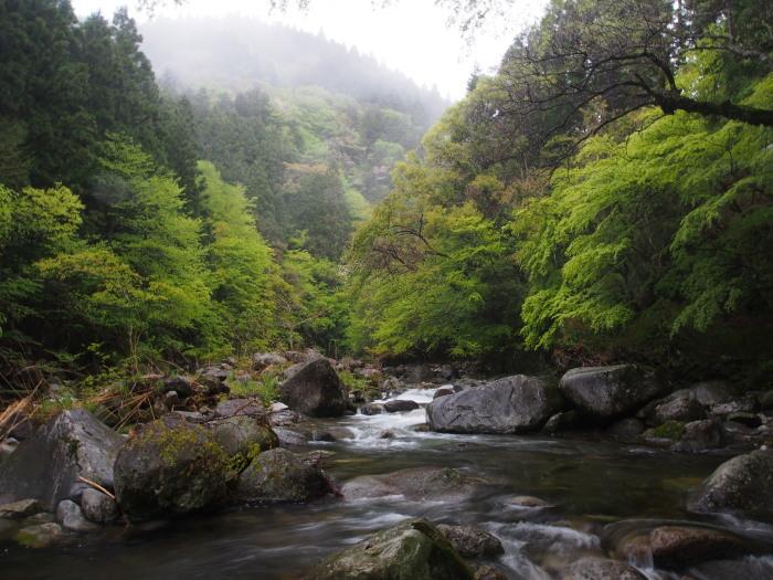 令和元年、初釣行は三河の溪へ。_c0197578_10130762.jpg