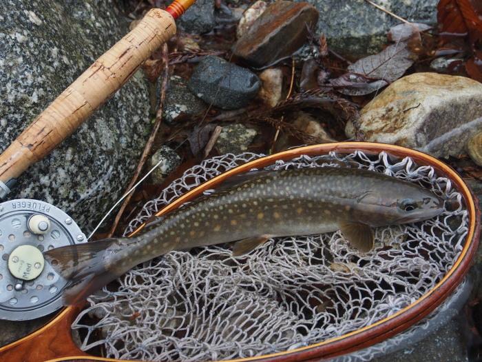 令和元年、初釣行は三河の溪へ。_c0197578_10354772.jpg