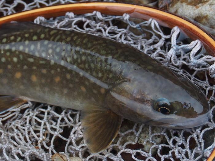 令和元年、初釣行は三河の溪へ。_c0197578_10360770.jpg