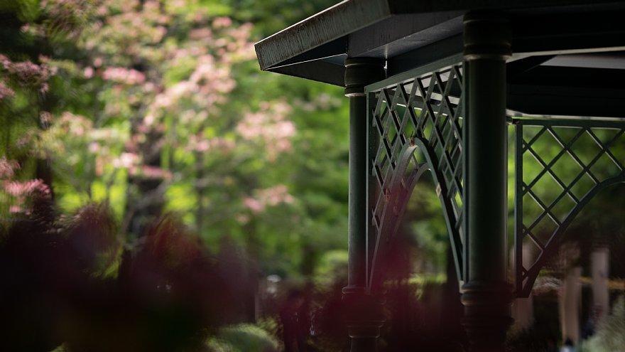 初夏を迎える都市公園_d0353489_20171782.jpg