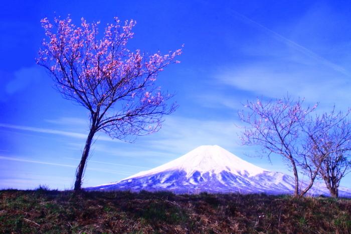 31年4月の富士(34)忍野新名庄川の富士_e0344396_21355823.jpg