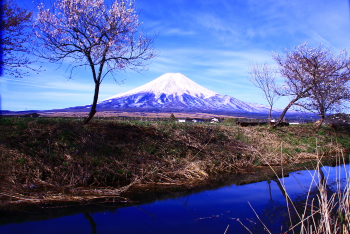 31年4月の富士(34)忍野新名庄川の富士_e0344396_21361207.jpg