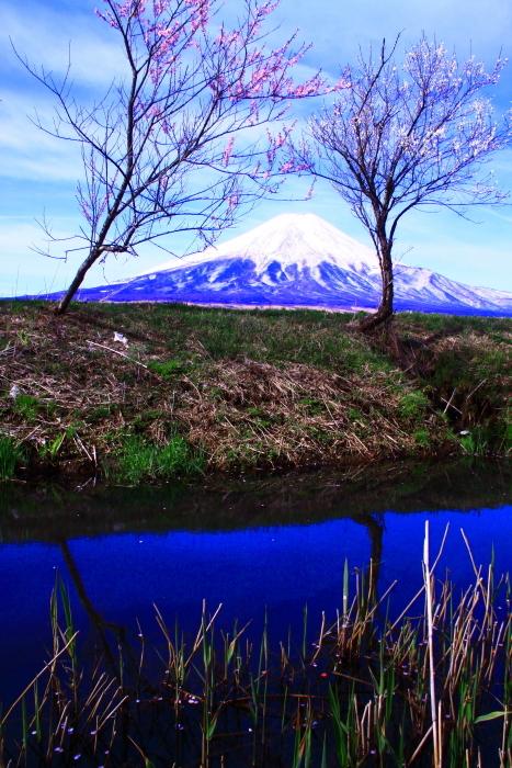 31年4月の富士(34)忍野新名庄川の富士_e0344396_21362017.jpg