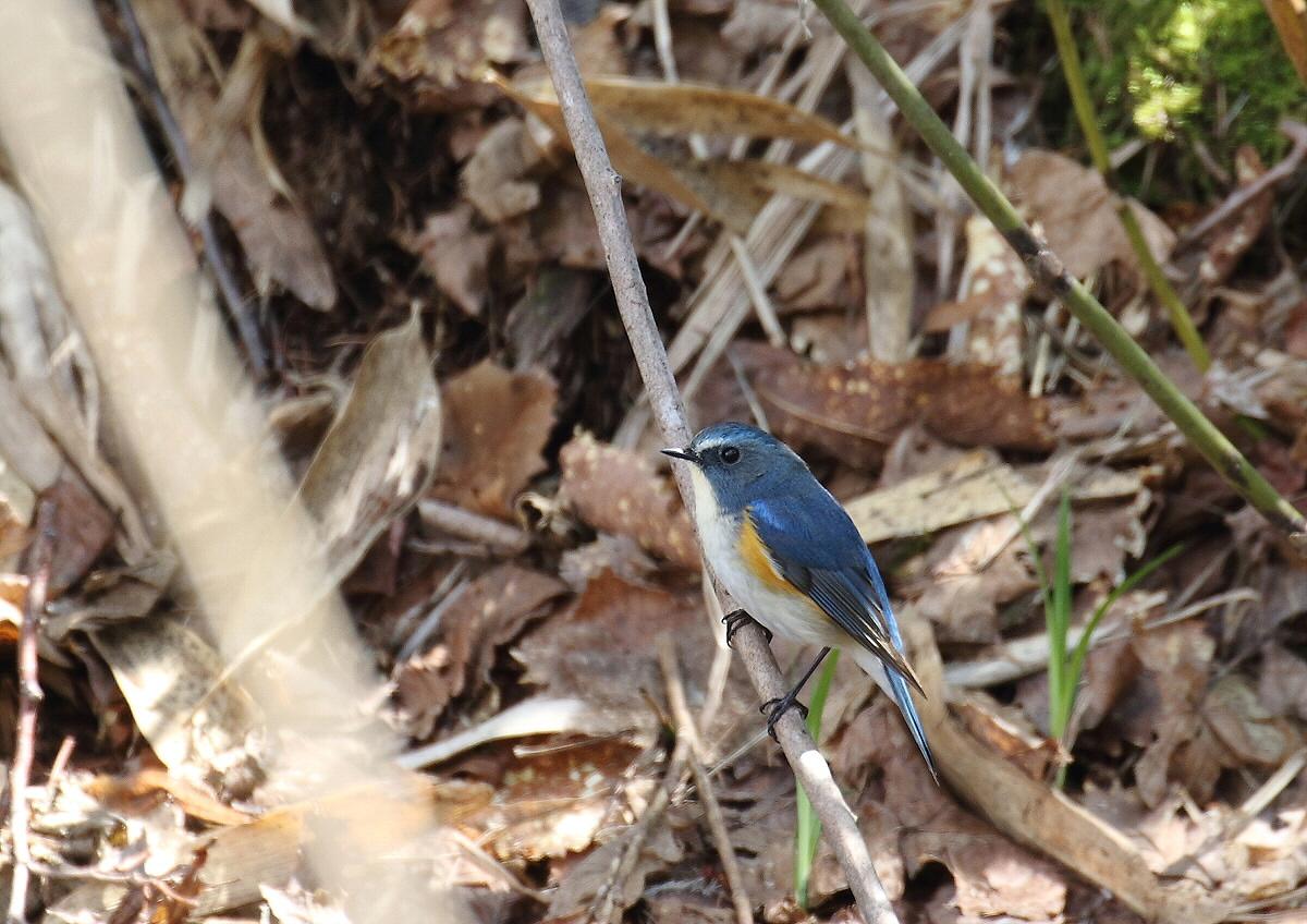 青い鳥・・小鳥♪_c0113597_13335062.jpg