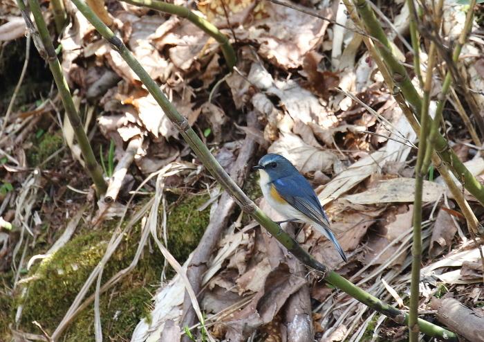 青い鳥・・小鳥♪_c0113597_13342061.jpg