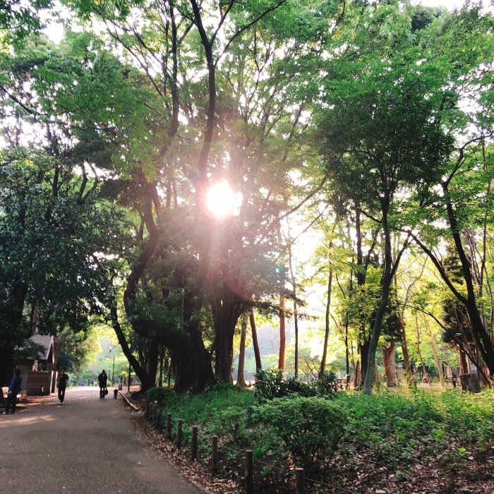 林試の森公園_d0138811_09381710.jpeg