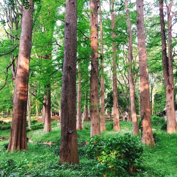林試の森公園_d0138811_09383786.jpeg