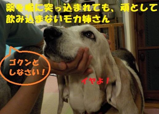 f0121712_06041386.jpg