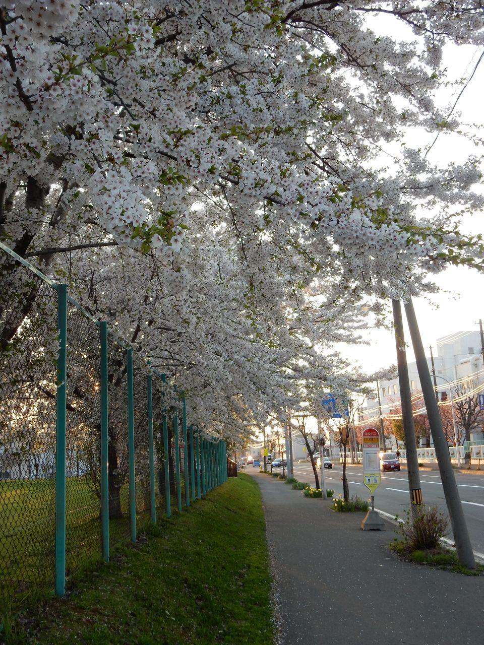 「花を見る会」_c0025115_23490906.jpg