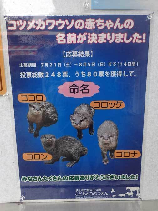 コツメカワウソ大家族!!(智光山公園こども動物園 October 2018)_b0355317_21041127.jpg
