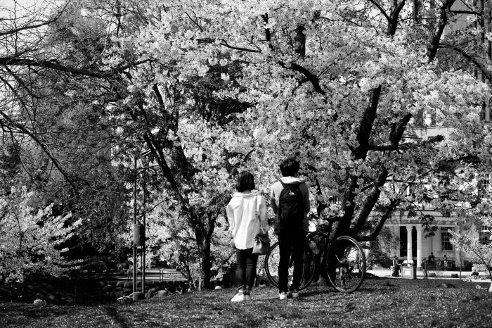 桜満開、春爛漫_c0192021_23202697.jpg