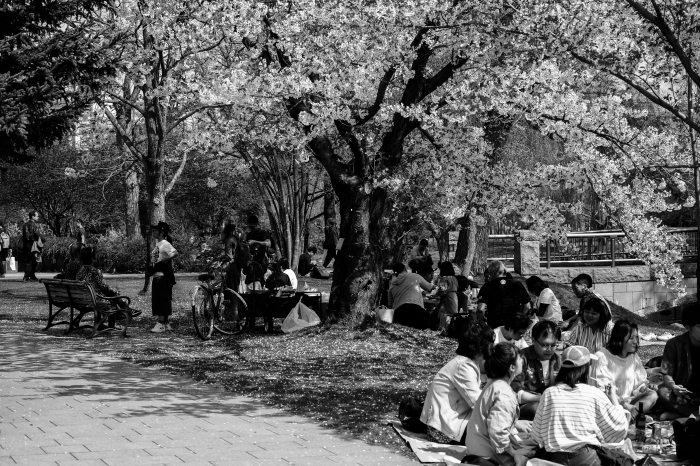 桜満開、春爛漫_c0192021_23204581.jpg