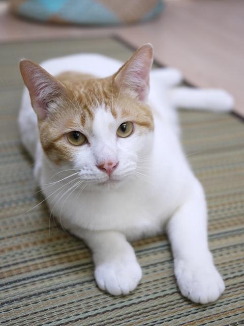 猫のお留守番 だんごくん編。_a0143140_23465663.jpg