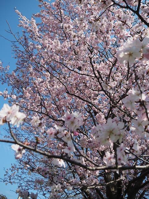 【5/3(金・祝)お花見ブレックファストツーリング!】 -ご報告_b0195144_14344139.jpg