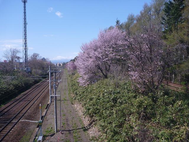 【5/3(金・祝)お花見ブレックファストツーリング!】 -ご報告_b0195144_14344142.jpg
