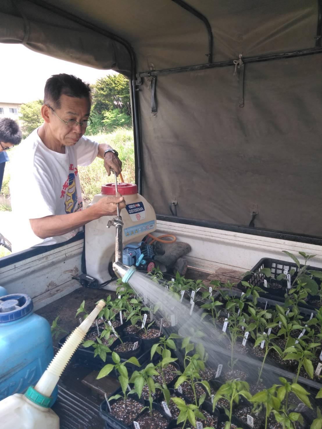 パプリカ ピーマンの鉢上げは圃場で・・・_c0222448_12442876.jpg