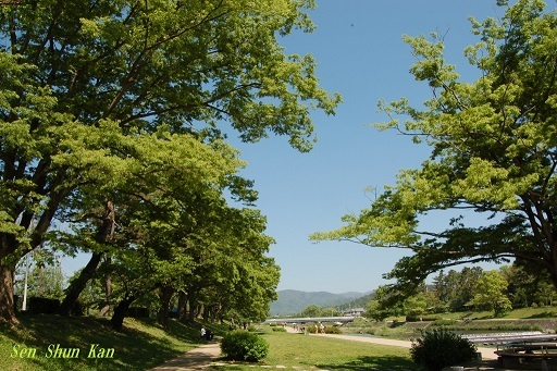 緑の賀茂川  2019年5月4日_a0164068_22584513.jpg