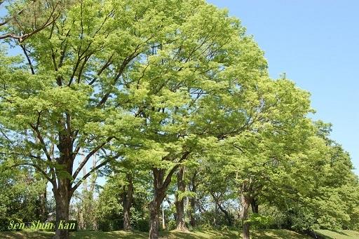 緑の賀茂川  2019年5月4日_a0164068_22593981.jpg