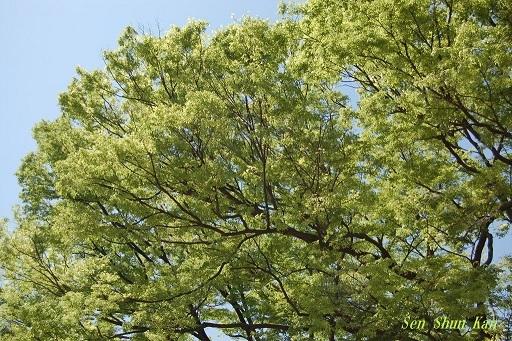 緑の賀茂川  2019年5月4日_a0164068_22593991.jpg