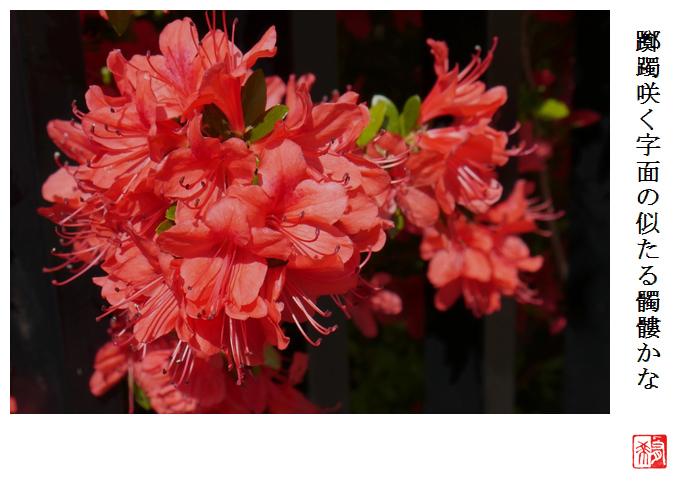 躑躅咲く字面の似たる髑髏かな_a0248481_21315360.jpg