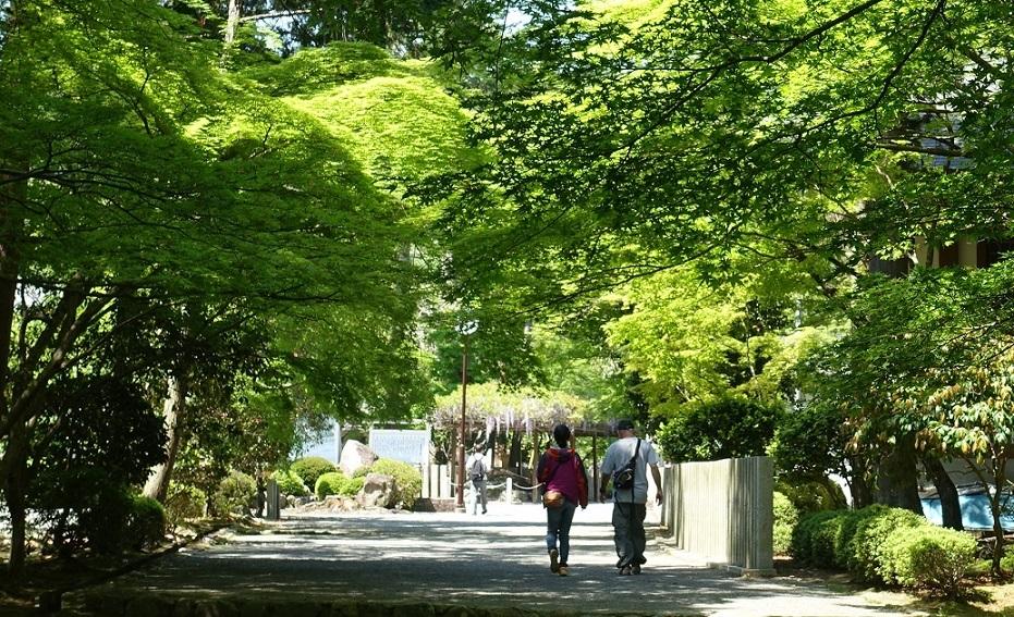 多田神社(兵庫・川西市)境内の「青もみじ」が見ごろ_d0136382_12044155.jpg