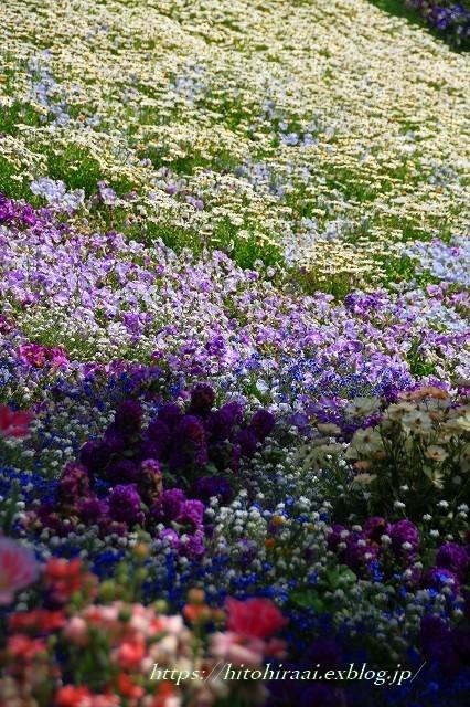 横浜里山ガーデンフラワーフェスタ_f0374092_16010200.jpg