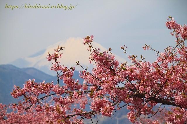 圧倒的桜。平成FINAL 古都の桜と富士の桜_f0374092_16301534.jpg