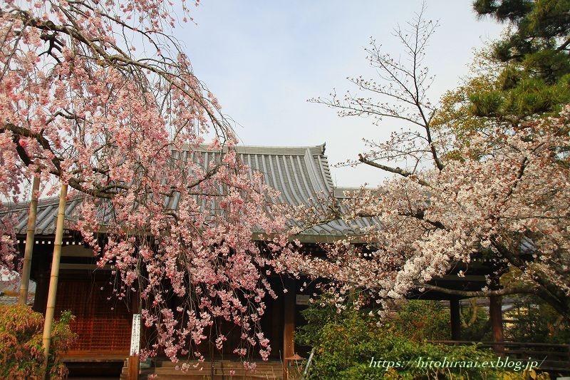 圧倒的桜。平成FINAL 古都の桜と富士の桜_f0374092_16443697.jpg