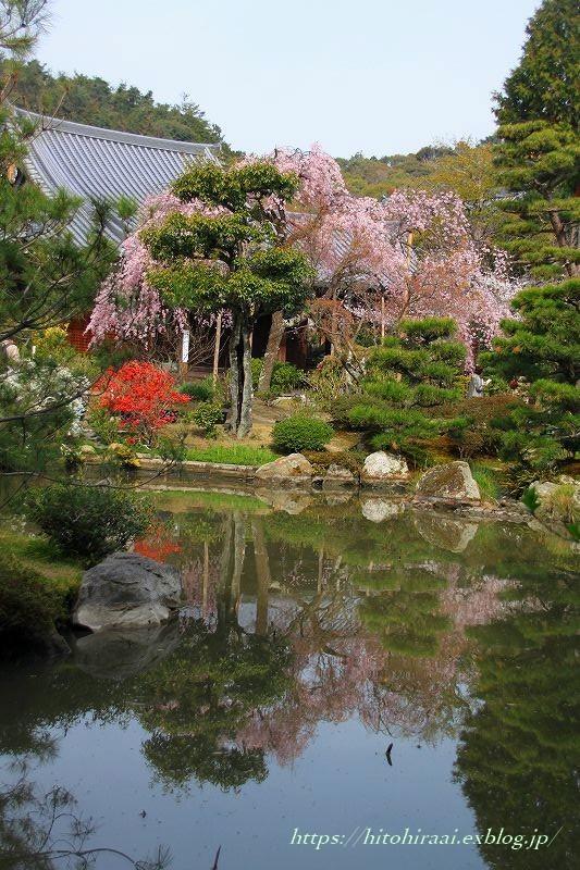 圧倒的桜。平成FINAL 古都の桜と富士の桜_f0374092_16465794.jpg