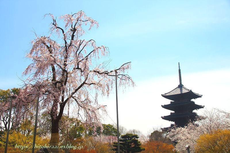 圧倒的桜。平成FINAL 古都の桜と富士の桜_f0374092_16490320.jpg