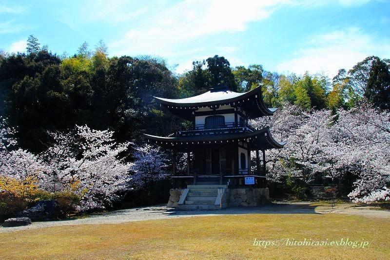 圧倒的桜。平成FINAL 古都の桜と富士の桜_f0374092_16523267.jpg