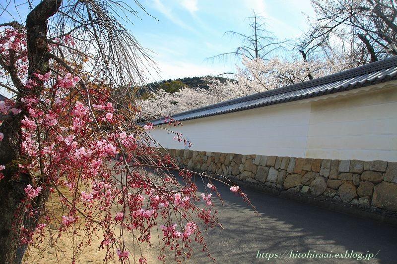 圧倒的桜。平成FINAL 古都の桜と富士の桜_f0374092_16550407.jpg