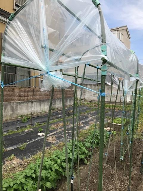 トマトのおうち_f0204295_14254046.jpg