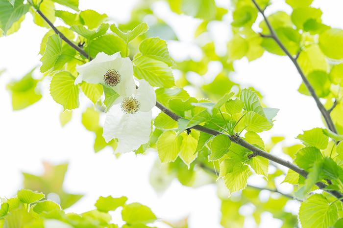 令和元年お祝いムードいっぱいの日比谷花壇大船フラワーセンター_b0145398_22592380.jpg