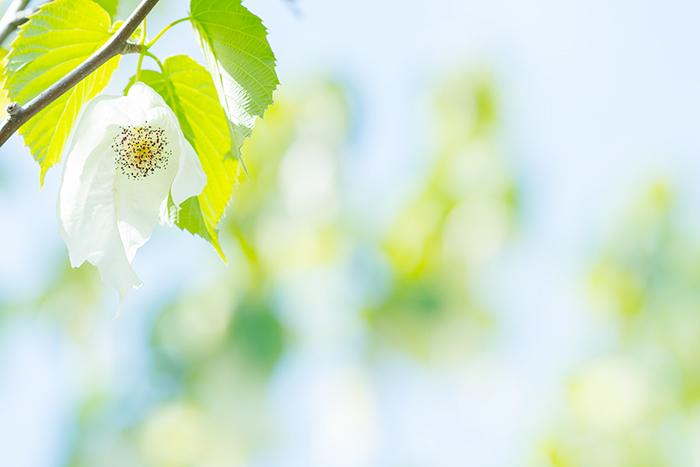 令和元年お祝いムードいっぱいの日比谷花壇大船フラワーセンター_b0145398_23000246.jpg