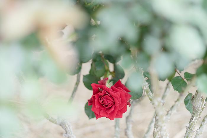 令和元年お祝いムードいっぱいの日比谷花壇大船フラワーセンター_b0145398_23020390.jpg